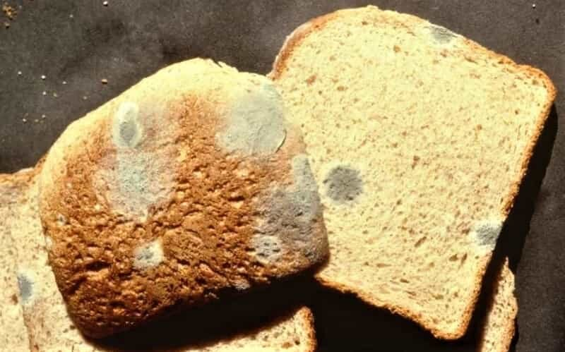 хлеб и плесень