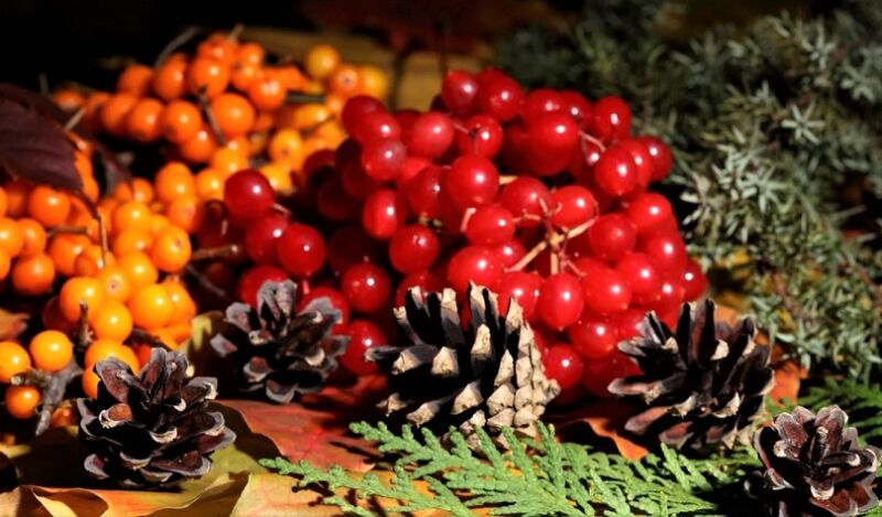 ягоды рябины и калины