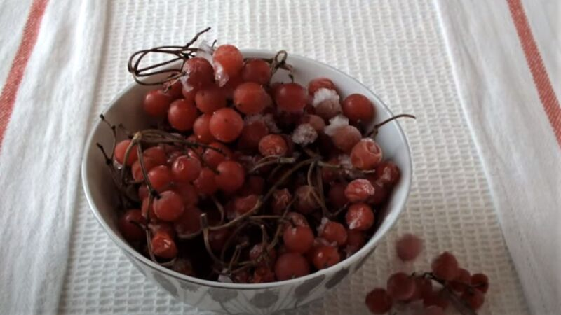 замороженные ягоды калины